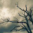 Silhouette of bare tree — Stock Photo #12458605