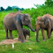 Family of elephants with young one — Stock Photo #12458608