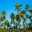 Palm forest — Stock Photo #12526664
