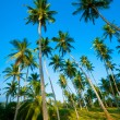 Palm forest — Stock Photo #12526665