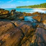 Tropical beach — Stock Photo #12526692