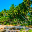 Palm forest — Stockfoto #12526728