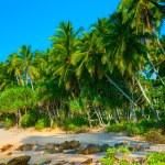 bosque de palmeras — Foto de Stock