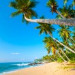 tropical beach — Stock Photo #12592882