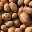 Potato crop — Stock Photo
