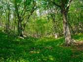 Forest landscape in the Crimea — Stock Photo