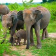 Family of elephants with young one — Stock Photo
