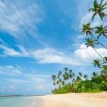 Tropical beach — Stock Photo #16215377