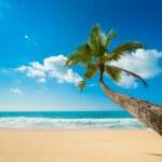 Tropical beach — Stock Photo #16215399