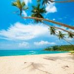 Tropical beach — Stock Photo #16215401