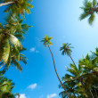 Palm forest — Stockfoto #16215405