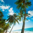 Tropical beach — Stock Photo #16215409