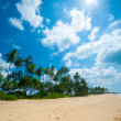 tropical beach — Stock Photo #16324291