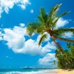 Tropical beach — Stock Photo #16324317