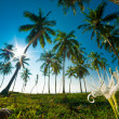 Palm forest — Stockfoto