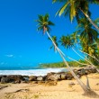 tropical beach — Stock Photo #17891553