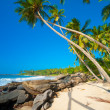 Tropical beach — Stock Photo #17891555