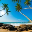 Tropical beach — Stock Photo #17891573