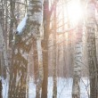 Winter wood landscape — Stock Photo