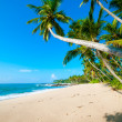 Tropical beach — Stock Photo #17891777