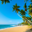 tropical beach — Stock Photo #17891779
