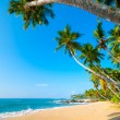 Tropical beach — Stock Photo #17891783