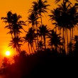 Beautiful tropical sunset — Stock Photo #17891799