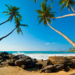 tropical beach — Stock Photo #19289843