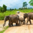 Group of wild elephants - Stock Photo