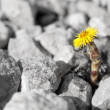 Stock Photo: Little yellow flower rises up