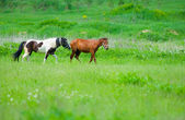 Two horses — Foto Stock