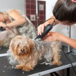 Grooming — Stock Photo #28400097