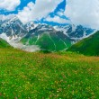 Beautiful meadow landscape near Ushguli, Svaneti, Georgia. — Stock Photo #28562811