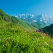 Beautiful meadow landscape near Ushguli, Svaneti, Georgia. — Stock Photo