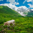 Beautiful meadow landscape near Ushguli, Svaneti, Georgia. — Stock Photo #28663941