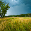 Stock Photo: Stormy skies over field
