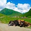 Country landscape in Svaneti — Stock Photo