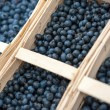 Fresh blueberry — Stock Photo