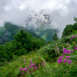 Mountain landscape with flowers on foreground — Stok fotoğraf