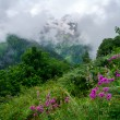 Mountain landscape with flowers on foreground — Stock Photo