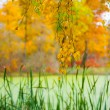 Autumn landscape of birch and a pond — Stock Photo