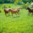 Horses galloping — Stockfoto