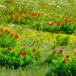 Meadow landscape in mountain Crimea — Stock Photo