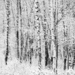 First snow covered branches — Foto Stock