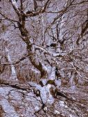 Interlacing branches — Stock Photo