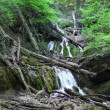 Mountain stream in Crimea, Ukraine — Stockvideo