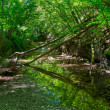 Mountain river flowing through the forest in Crimea — Stock Photo