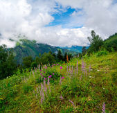Mountain landscape with flowers on foreground in Svaneti — ストック写真