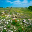 Stock Photo: summer mountain landscape in crimea