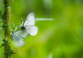 Butterflies on the flower — Stock Photo
